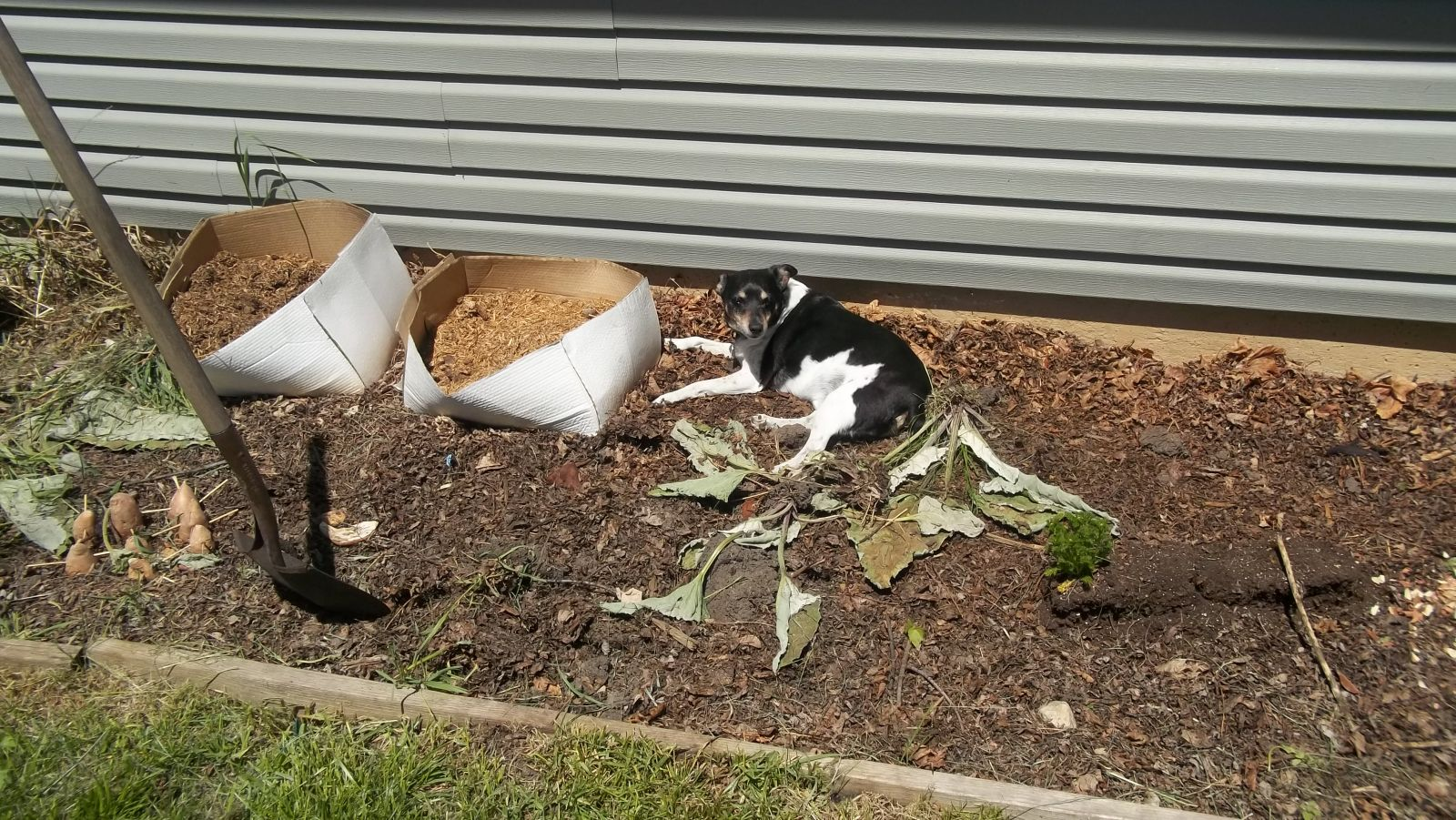 compost pile puppy