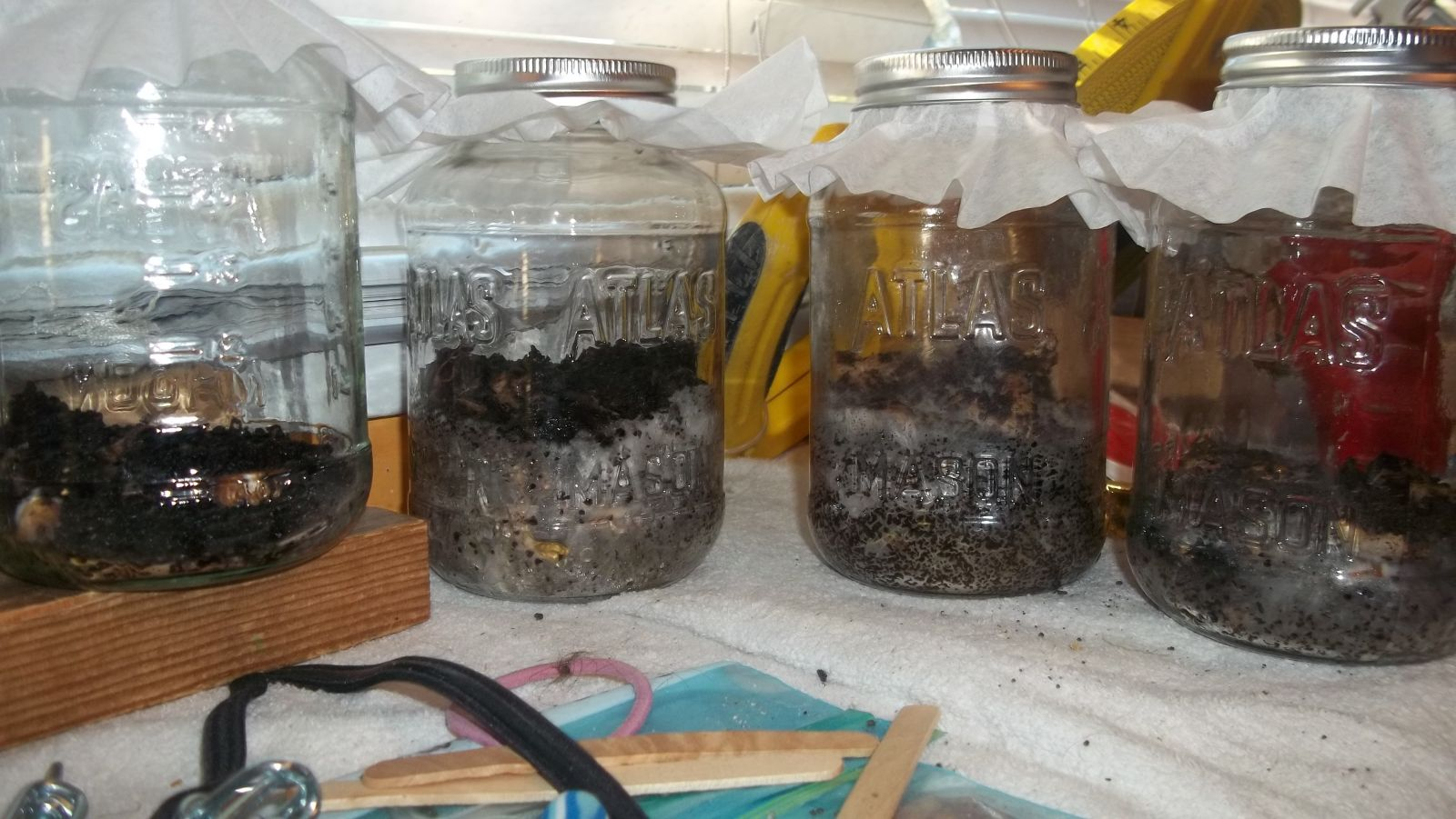 Growing Mushrooms From Coffee Grounds