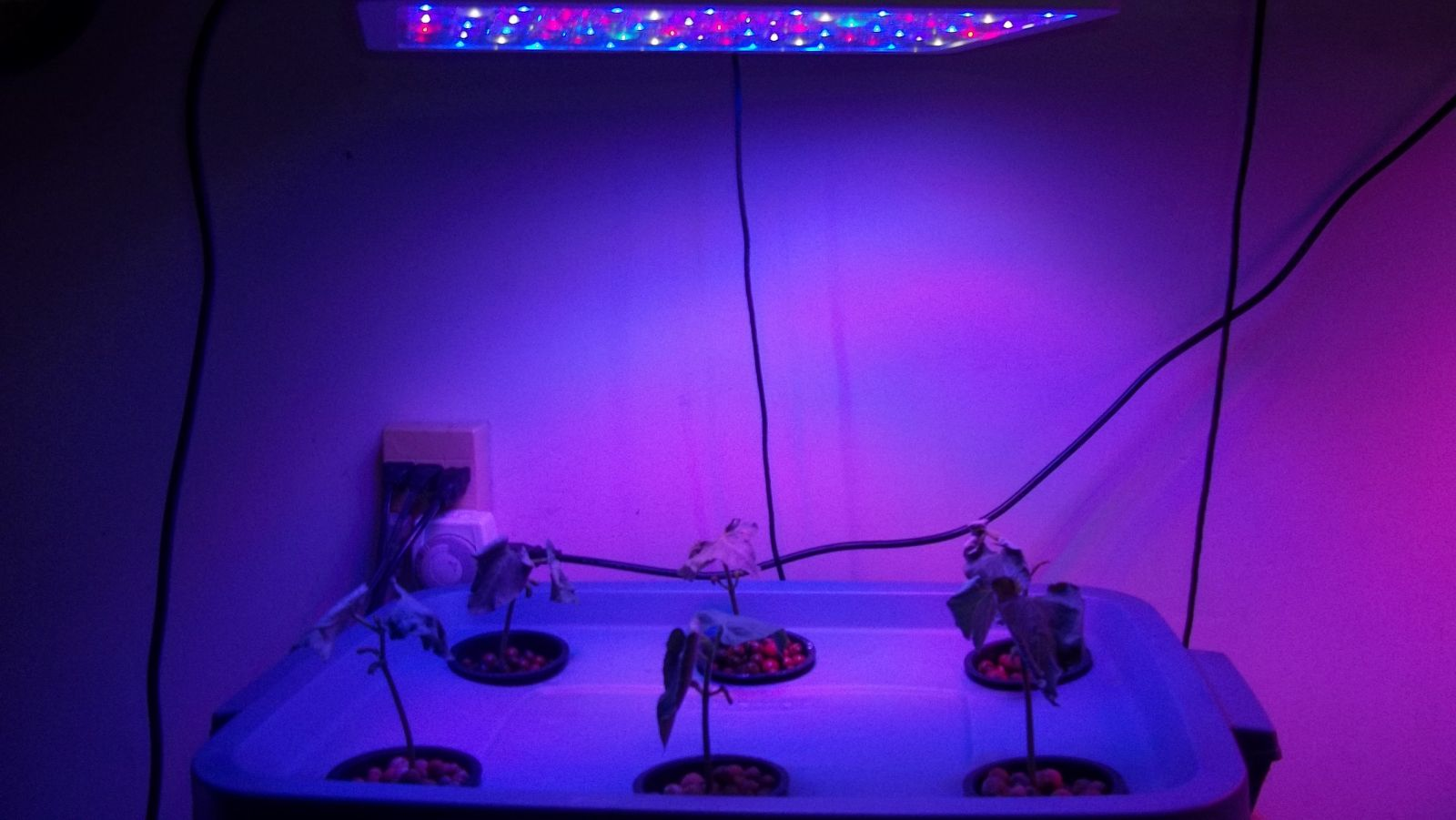 VEG mode led light