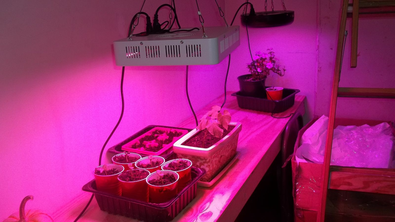Review: HIGROW 2000 watt LED Grow Light | Tomorrow's Garden