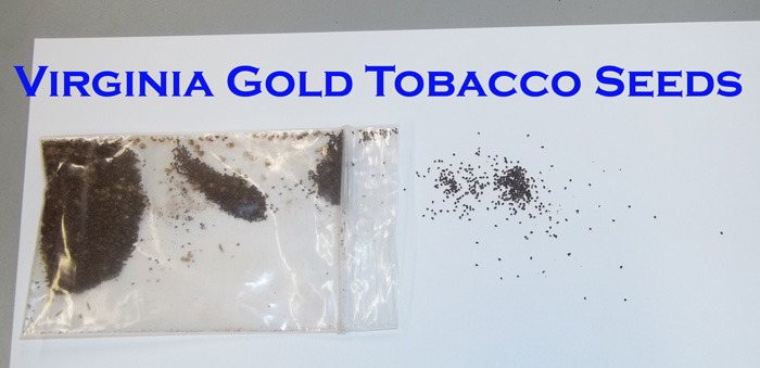Virginia Gold Tobacco Seeds